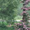 arbre et arbuste fleuri